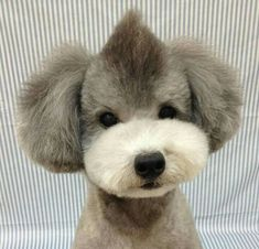 pet grooming shaver (paid link) Click image for more details. #Puppy Dog Grooming Styles, Poodle Grooming, Cat Grooming, Cortes Poodle, I Love Dogs, Cute Dogs, Poodle Haircut Styles, Perro Shih Tzu, Sweet Dogs