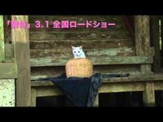 玉之丞さまの猫萌え動画①―映画「猫侍」メイキング - YouTube Neko, Cats, Youtube, Gatos, Kitty, Cat, Cats And Kittens, Youtube Movies, Kittens