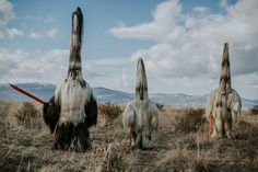 British photographer Aron Klein's 'Kukeri' series is a project documenting Bulgaria's ancient annual pagan rituals performed in the countries most remote mountain of the Balkan region. The word…More  Bulgaria Photography  Dans notre blog beaucoup plus d'informations  https://storelatina.com/bulgaria/travelling  #బల్గేరియా #receitas #Bharugeriya #Bulgarien