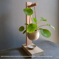 Die neue Trendpflanze: Pilea peperomioides, Here are a few Indoor gardening tips for the beginner who wants to grow a home vegetable garden. Learn how to choose plants, containers and the best location for a vegetable garden. Hanging Succulents, Hanging Plants, Indoor Plants, Succulent Pots, Indoor Gardening, Indoor Flowers, Indoor Plant Stands, Organic Gardening, Greenhouse Gardening