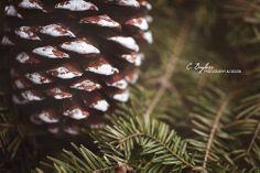 CMpro Daily | C. Bayless Photography & Design