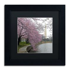 """Trademark Art """"Washington Blossoms"""" by CATeyes Framed Photographic Print Size: 1"""