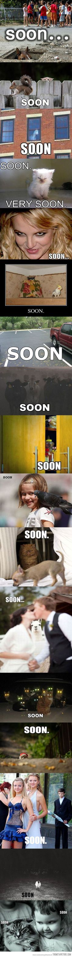 Soon...very soon... This made me laugh a lot harder than it should have