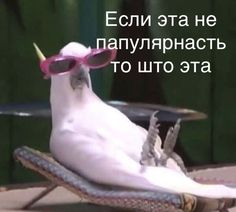 Your hatred drives me crazy!-Your hatred drives me crazy! Memes Funny Faces, Stupid Memes, Animal Memes, Funny Animals, Hello Memes, Happy Memes, Russian Memes, Funny Mems, Cute Love Memes