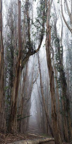 Twisted Path - Presidio Park - California - USA - Writing inspiration #nanowrimo #scenes #settings