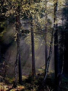 Misty morning in Sverige Kingdom Of Sweden, House In Nature, Scandinavian Countries, Largest Countries, What A Wonderful World, Beautiful Landscapes, Stockholm, Wonders Of The World, Finland