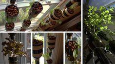 Un jardin potager à l'intérieur de ma maison!