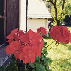 Postări pe Instagram de la Diana Petre • Aug 26, 2018 at 3:08 UTC Diana, Instagram Posts, Plants, Flora, Plant, Planting