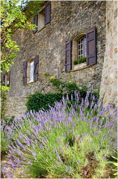 Love the different varieties of lavender. #countryfrench