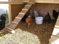 Construire un Poulailler - Poulailler pas cher - Poulailler Construire - Poulailler en bois - Faire poulailler