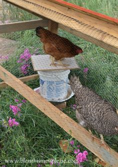 DIY chicken water and feeder from 5-gallon buckets - Bless This Mess