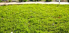 After a cold, dormant winter, it's time to get your grass growing again. Learn how to aerate and top dress your lawn with this guide from Bunnings. How to aerate and top dress your lawn. How To Lay Turf, Diy Home Cleaning, Top Soil, Environmental Health, Brick Patterns, Garden Club, Gardening Gloves, Lawn Care, Lawn