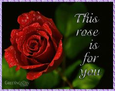 #AnimatedGifS, #GIF, #Love #rose http://greetings-day.com/beautiful-animated-greeting-card-image.html Beautiful Animated Greeting Card Image.