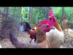Permaculture Self Reliance Backyard Farming - YouTube