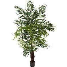 Nearly Natural 6' Areca Palm Tree (€110) ❤ liked on Polyvore featuring home, home decor, floral decor, plants, flowers, fillers, trees, phrase, quotes and saying