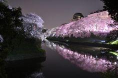 Il festival di primavera in Giappone, il fiore del ciliegio come simbolo di vitalità!