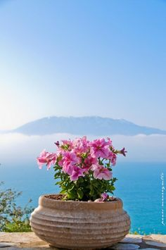 "A Greek version of a garden. ""In A Pot' in Nafpaktos. Beautiful World, Beautiful Places, Santorini Grecia, Greece Today, Greece Pictures, Greece Islands, Belleza Natural, Greece Travel, Dream Vacations"