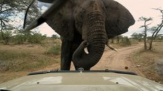 G Adventures CEO Wilson takes about what it's like to travel with him through East #Africa.