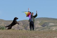 Go fly a kite! Things to do This Summer Illustrated by Dogs Photography Courses, Photography Tutorials, Go Fly A Kite, Things To Do, Road Trip, Best Friends, Action, Photoshoot, Digital
