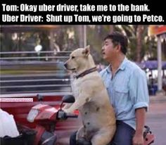 Jokes of the day for Friday, 17 May 2019 Funny jokes, funny memes and funny pictures collected from the internet on Friday, 17 May 2019 Funny Animal Pictures, Funny Images, Funny Photos, Funny Animals, Animal Pics, Adorable Animals, Funny Kids, Funny Cute, Crazy Funny