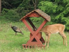 A Deer eating out of the Deer feeder while a Turkey looks on.