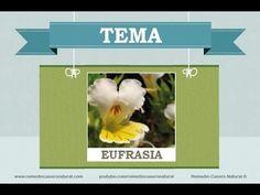 Beneficios, nutrientes y propiedades de la eufrasia. Más información en: http://www.remediocaseronatural.com/comidas-sanas-beneficios-eufrasia.htm