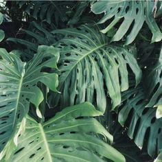 Tropical Green Plants
