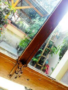 The Window~