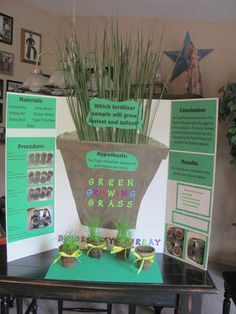 Life and Times of the 4 Bs: Braileys Fifth Grade Science Fair Project - Green Growing Grass Life and Times of the 4 Bs: Braileys Fifth Grade Science Fair Project - Green Growing Grass Plant Science Fair Projects, Science Project Board, Science Fair Board, Science Fair Experiments, Science Activities, Science Education, Science Expo Ideas, Fifth Grade Science Projects, Science Worksheets
