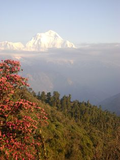 Dhaulagiri Mountain Range from Poonhill (Annapurna Region)