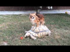 Dog Takes the Tortoise Taxi - Neatorama