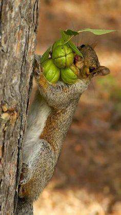 Eekhoorn met wintervoorraad. (fruit animals eyes)