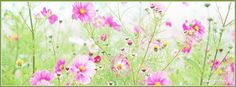 Patch of Pink Flowers Facebook Cover