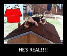 "Funny Beagle  refrigerator magnet 3 1/2x 4 """