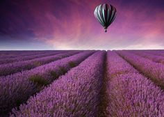 "Lavender Fields Hot Air Balloon Sunset 5 x 7 Photograph in 8 x 10 Mat Travel Photography Landscape Fine Art Photography Matted Print. Hot Air Balloon Drifting Over Lavender Fields at Sunset, 5 x 7 Fine Art Photograph matted in White 8"" x 10"", 45 degree bevel cut, Archival Acid-Free Mat with backing, signed on front of mat. Fits 8 x 10 Frame. Photograph is printed on premium glossy archival photographic paper using premium archival pigmented inks. Photograph and Mat are hinge mounted to…"