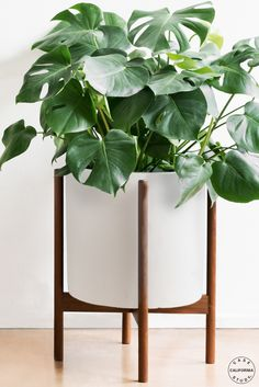 Modernica Case Study XL Cylinder with Wood Stand