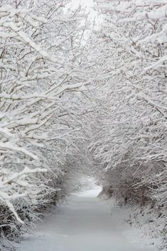 I love Winter Scenes like this ✯ Snow Tunnel by Oni-san Winter Szenen, Winter Love, Winter Magic, Winter White, Winter Walk, Snow White, Winter Season, Winter Socks, Winter Wonderland