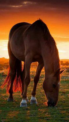 Beautiful photo!!!