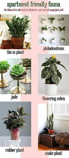 apartment friendly plant options for those of us (mainly me) who tend to kill plants...