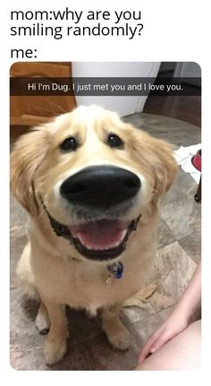 Funny meme jokes that will never let you down. The memes have funny part attached to them they never fail to surprise you as well. Don't waste your time check our dank meme jokes of all time. Disney Jokes, Funny Disney Memes, Funny Dog Memes, Funny Relatable Memes, Cute Animal Memes, Animal Jokes, Funny Animal Pictures, Animal Pics, Cute Funny Dogs