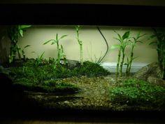 Plants for Frog Vivarium? | Reptile Forums - Information