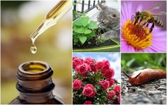 9 Clever Ways To Use Essential Oils In The Garden