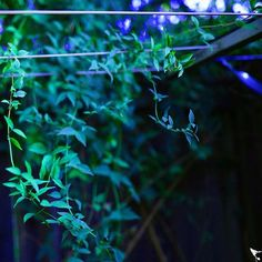 Reflect creeping vines 3 of 3  #vine #green #plant #reflect #natureinspired #garden #mothernature #nature #fresh #trek #photooftheday #livecolorfully #color #instaplant #texture #adventure #summer #travel #closeup #photography #sigma #nikon #nikondf #Brisbane #queensland #Australia #somartcreations #somartupclose #upclose #upcloseandpersonal @somart_creations