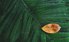 Different Leaf by salmon.black on @creativemarket