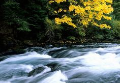 BLM considers logging on McKenzie River forestland