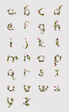 Alphabet of Flowers! by Anna Lee
