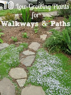 10 Low-Growing Plants to Consider Next to Garden Walkways and Paths