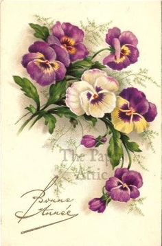 Pansies Pansy Antique Vintage French Chromo Postcard by lois