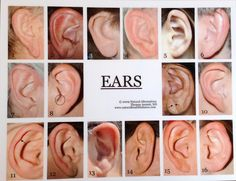 Image result for ear ptypes