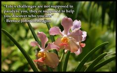 """""""Life's challenges are not supposed to paralyze you, they're supposed to help you discover who you are. Unique Flowers, Exotic Flowers, Beautiful Flowers, Orchid Show, Wild Orchid, Life Challenges, Make Me Smile, Make It Simple, Life Is Good"""